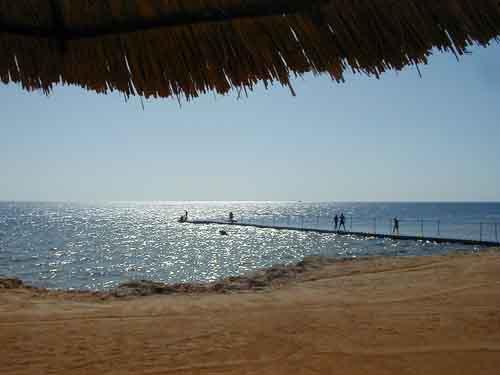 Sharks bay, Sharm El Sheikh, Egypt