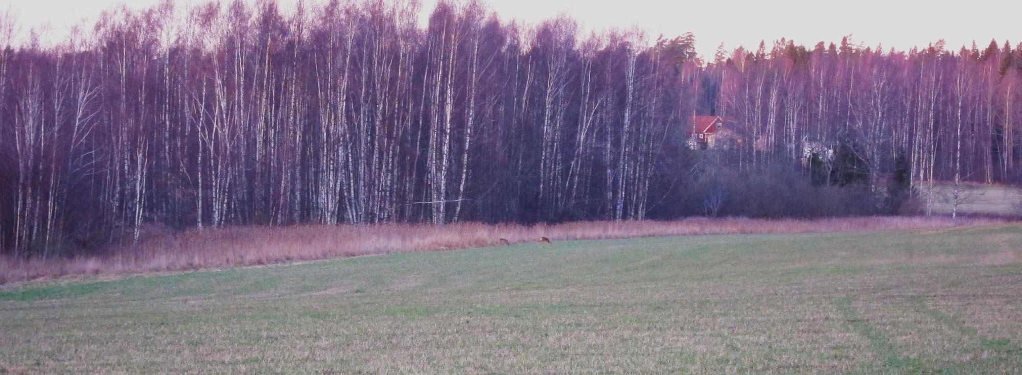2015-01-18 jakt 02